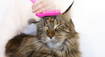 Pet Grooming in Miami Florida