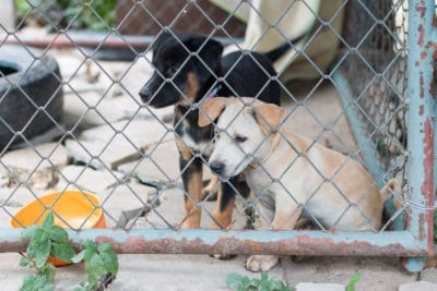 Puppy Adoption – Stay Away From Puppy Mills