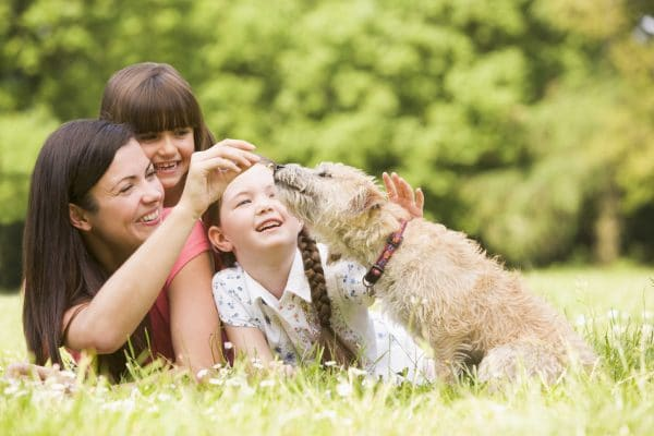The-Family-Pet-Care-and-Ownership-in-Divorce-e1468529357516