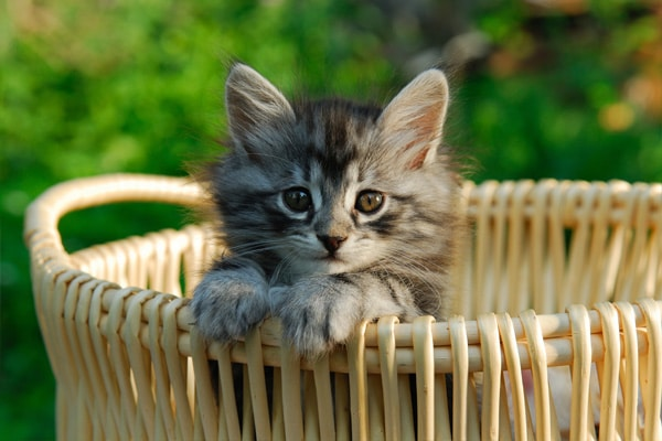 new-kitten-packages