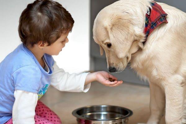 pets-care-services