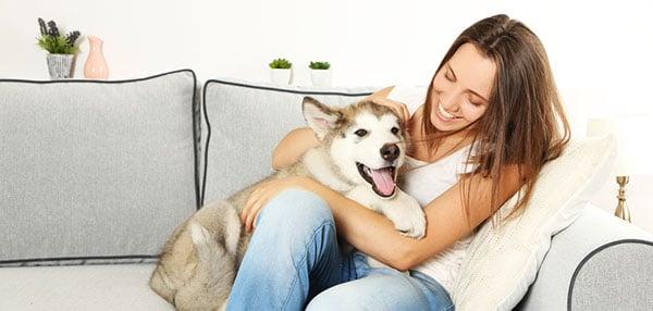 pet sitting rates want to know how much pet sitters charge. Black Bedroom Furniture Sets. Home Design Ideas